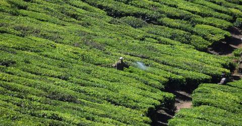 В Китае арестовали мошенников за токены, обеспеченные тибетским чаем